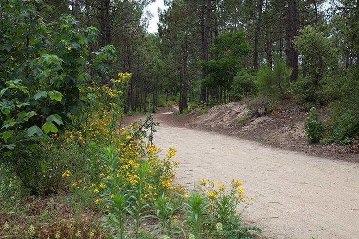 Forêt de Saint Jean de Monts proche camping